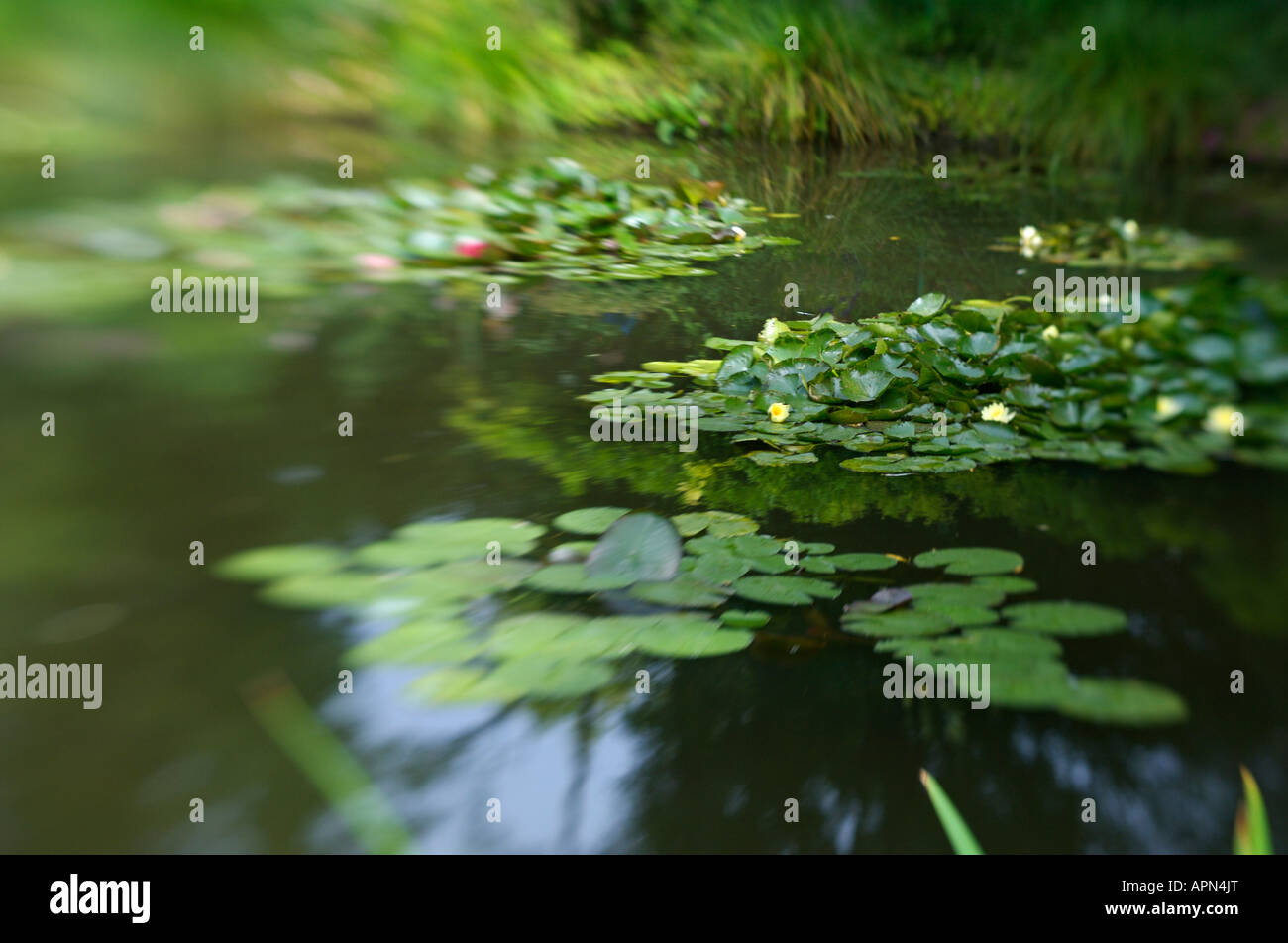 Monet s Garden in Giverny France - Stock Image