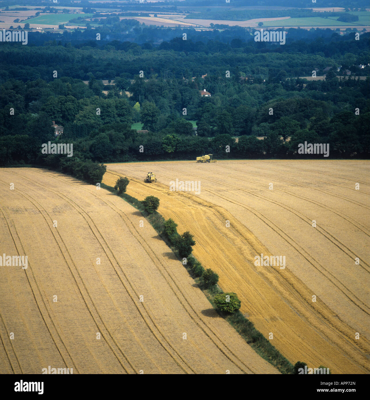 Aerial view of ripe wheat crops with combine harvesters in one field Berkshire - Stock Image
