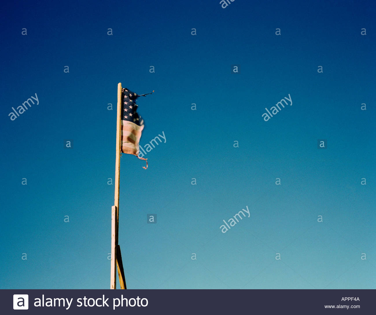 Torn ripped American flag - Stock Image