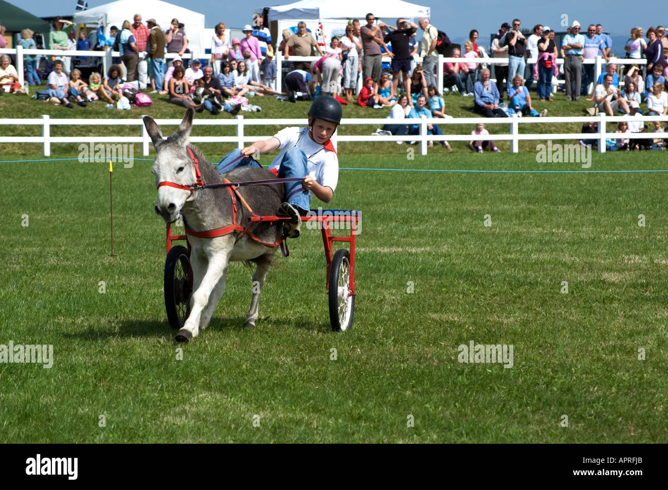 youngster riding a pony and trap - Stock Image