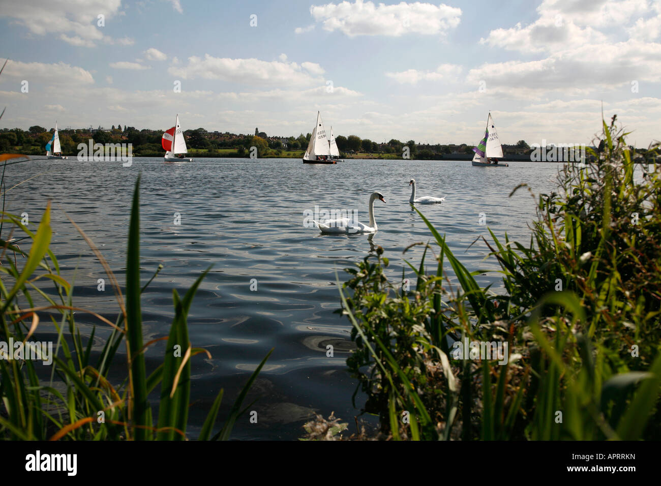 Swans and yachts on Welsh Harp at Neasden, London - Stock Image