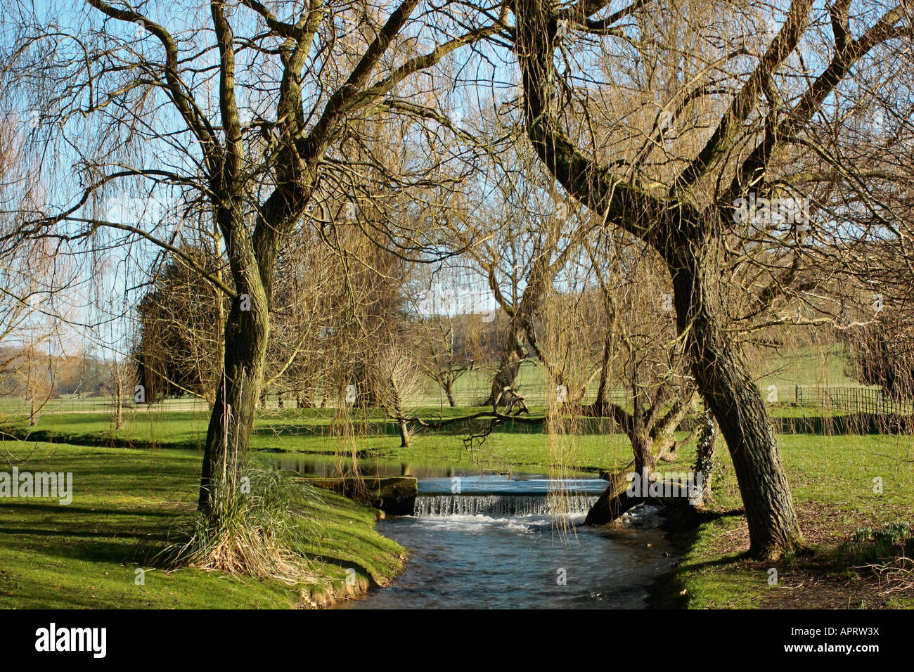 Pair of Weeping Willow trees leaning over stream at West Dean Gardens, Sussex, England Stock Photo