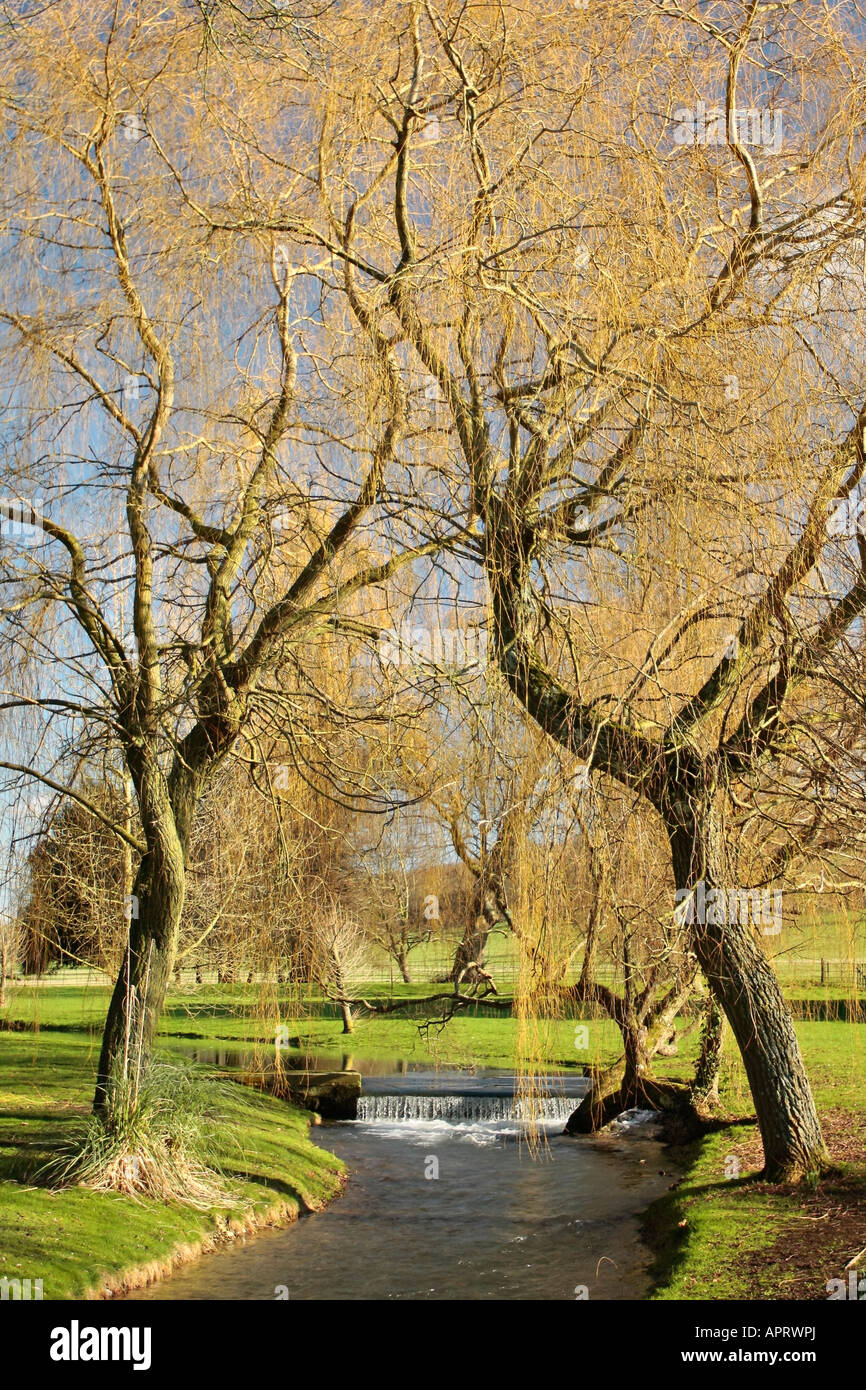 Pair of Weeping Willow trees leaning over stream at West Dean Stock ...