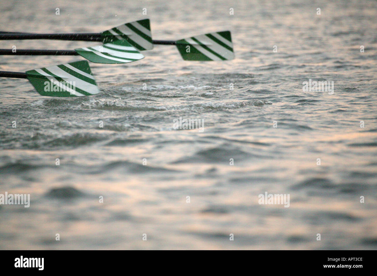 Green and white rowing boat blades in action - Stock Image