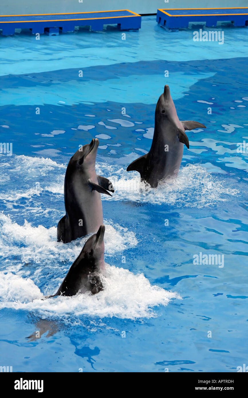 Dolphins standing in water at Ocean Park, Hong Kong Stock Photo