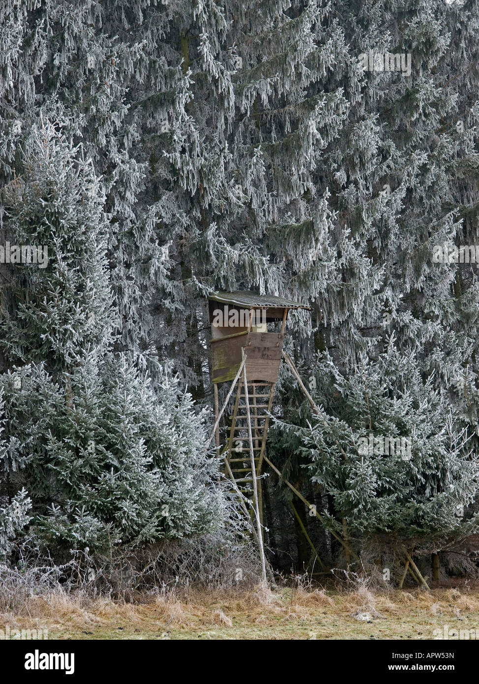 rised hide in forest in the middle of frozen spruces at the edge of a field in winter time - Stock Image