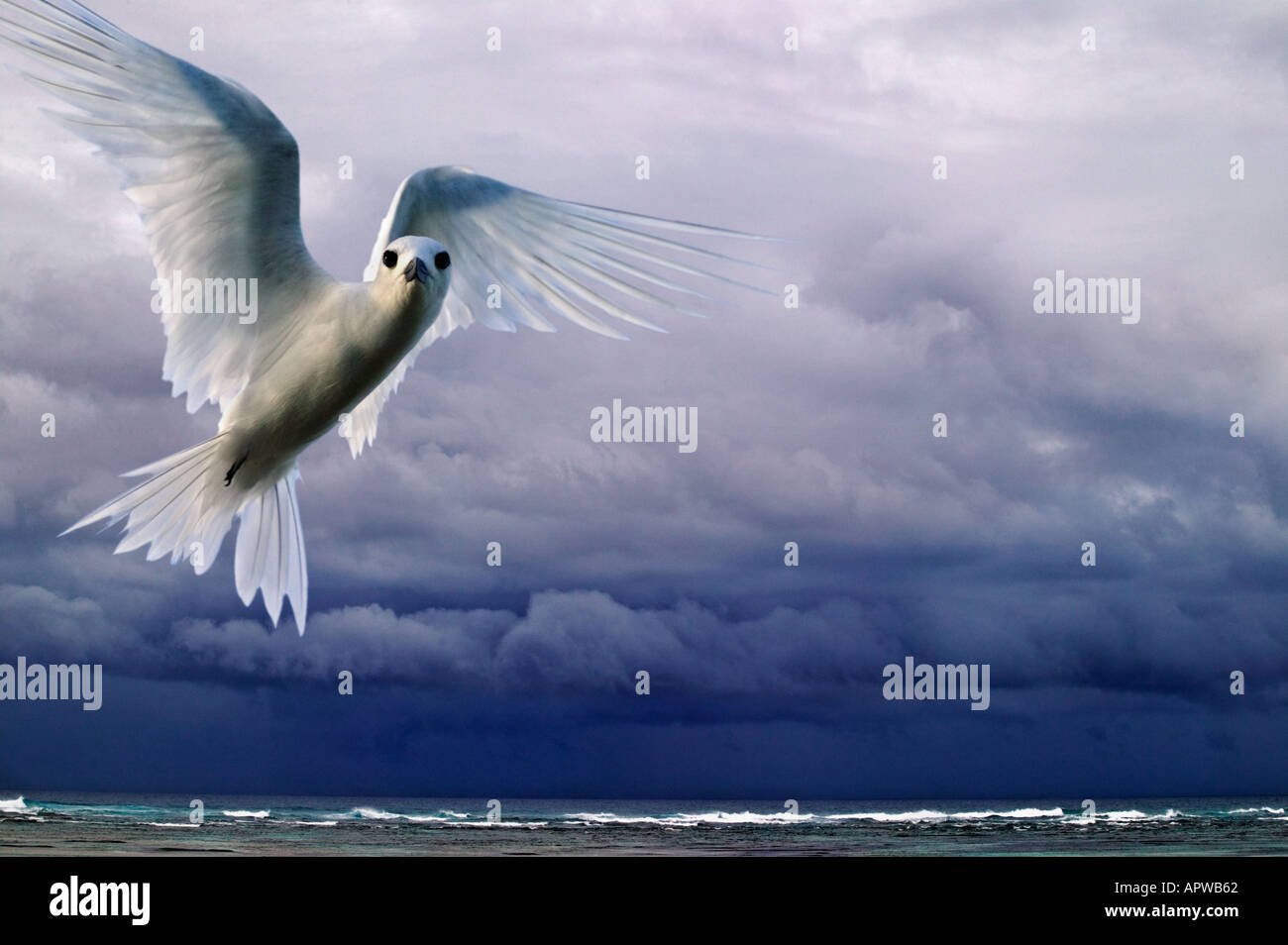 Storm clouds over ocean with white fairy tern Gygis alba Bird Island Seychelles Digitally modified image - Stock Image
