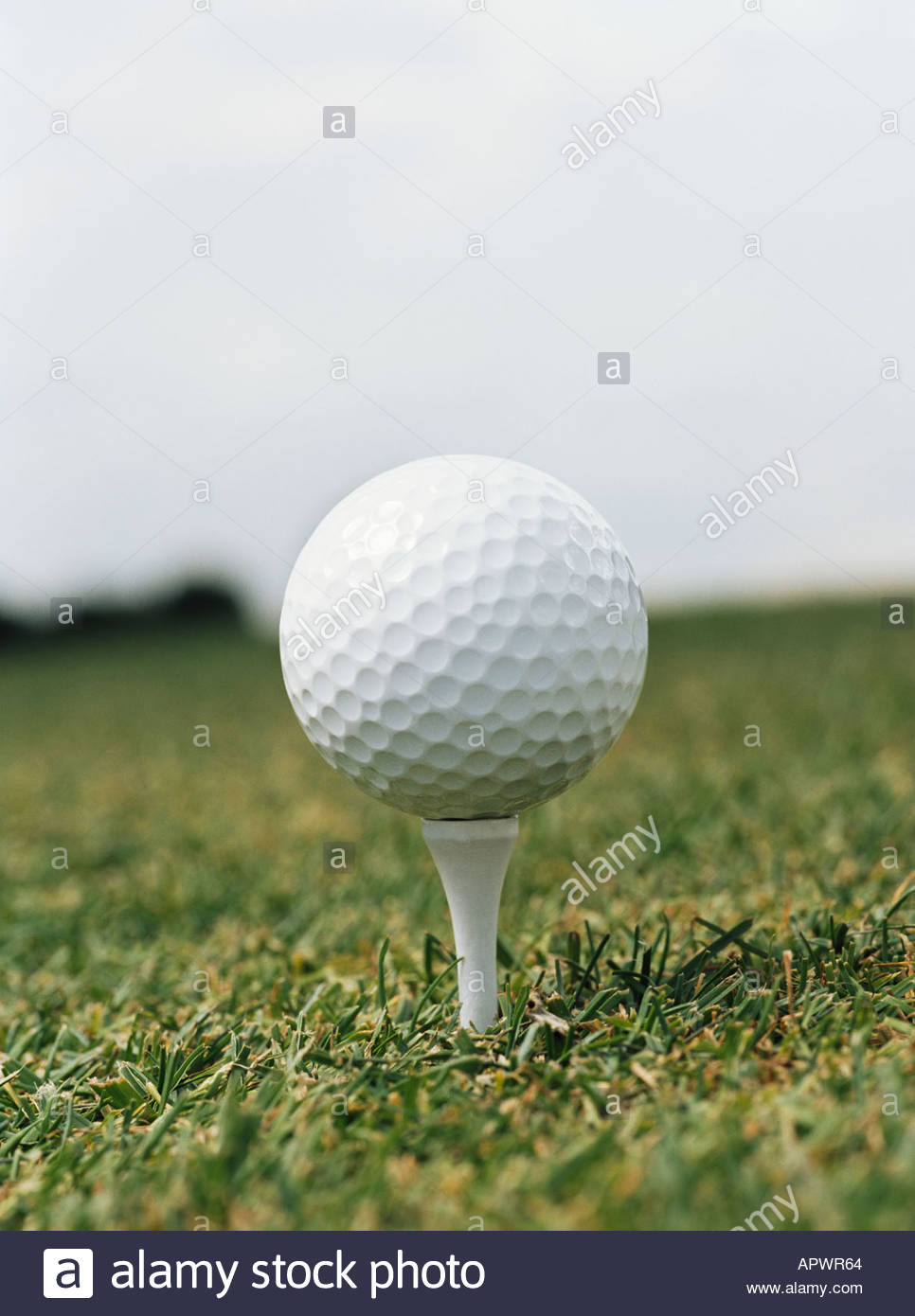 Golf ball on tee - Stock Image