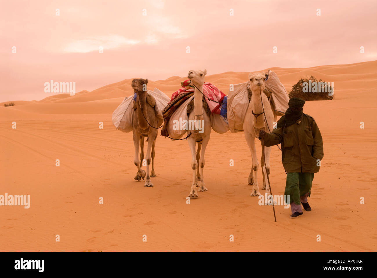 A lone Tuareg man crossing the Libyan Sahara near Ubari on a dull overcast day with his camels - Stock Image