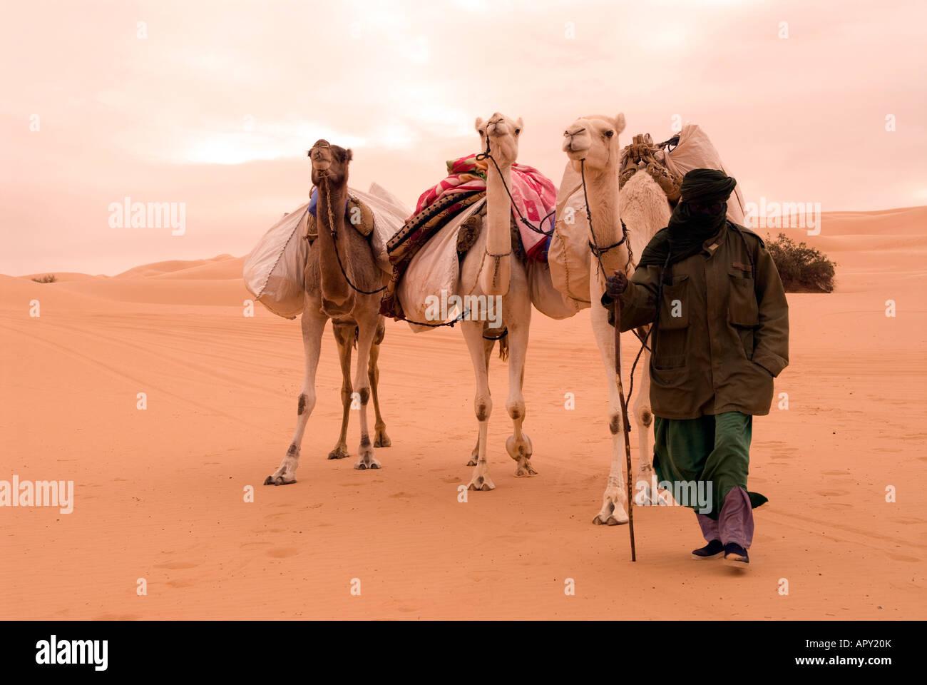 A lone Tuareg man crossing the Libyan Sahara near Ubari on a dull overcast day with his camels, Ubari, Libya, north - Stock Image