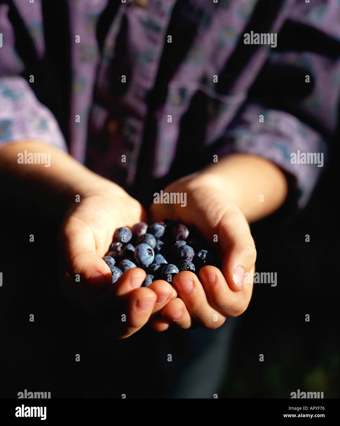 Young Boy 7 years old cupping Blueberries in his hands Stock Photo