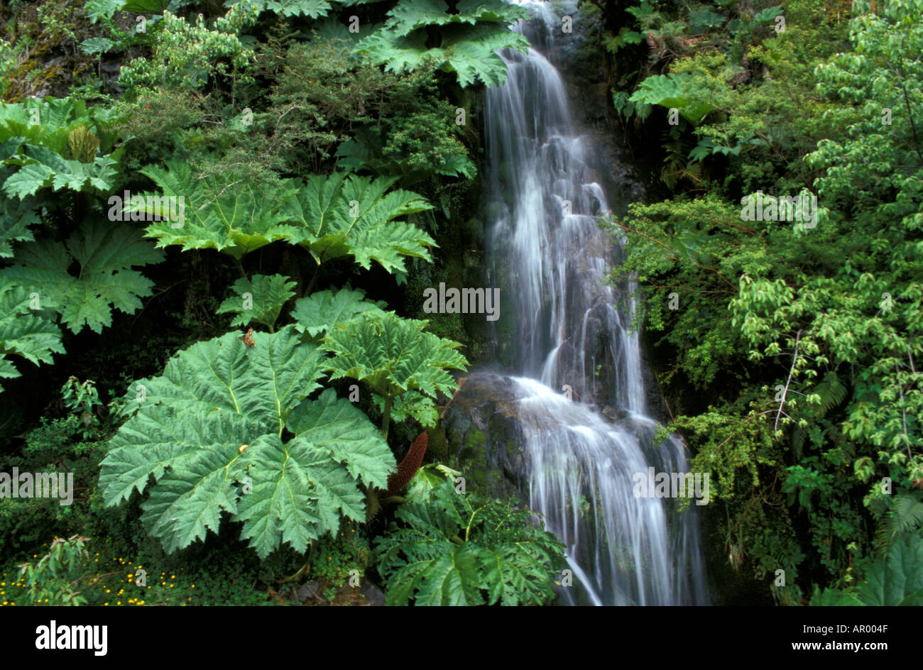 Waterfall Queulat National Park Chile Stock Photo