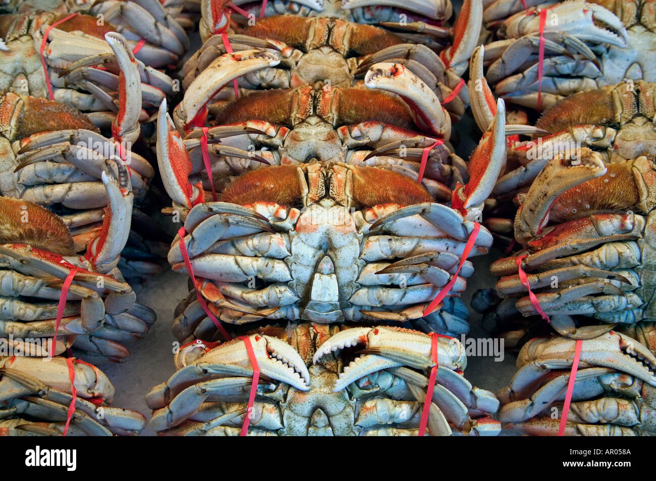 Stack of Dungeness crab at Pike Place Market Seattle Washington - Stock Image