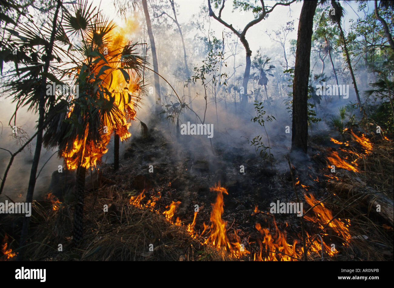Summer Bushfire in Litchfield National Park, forest fire in summer after dry period, North Australia, Australia - Stock Image