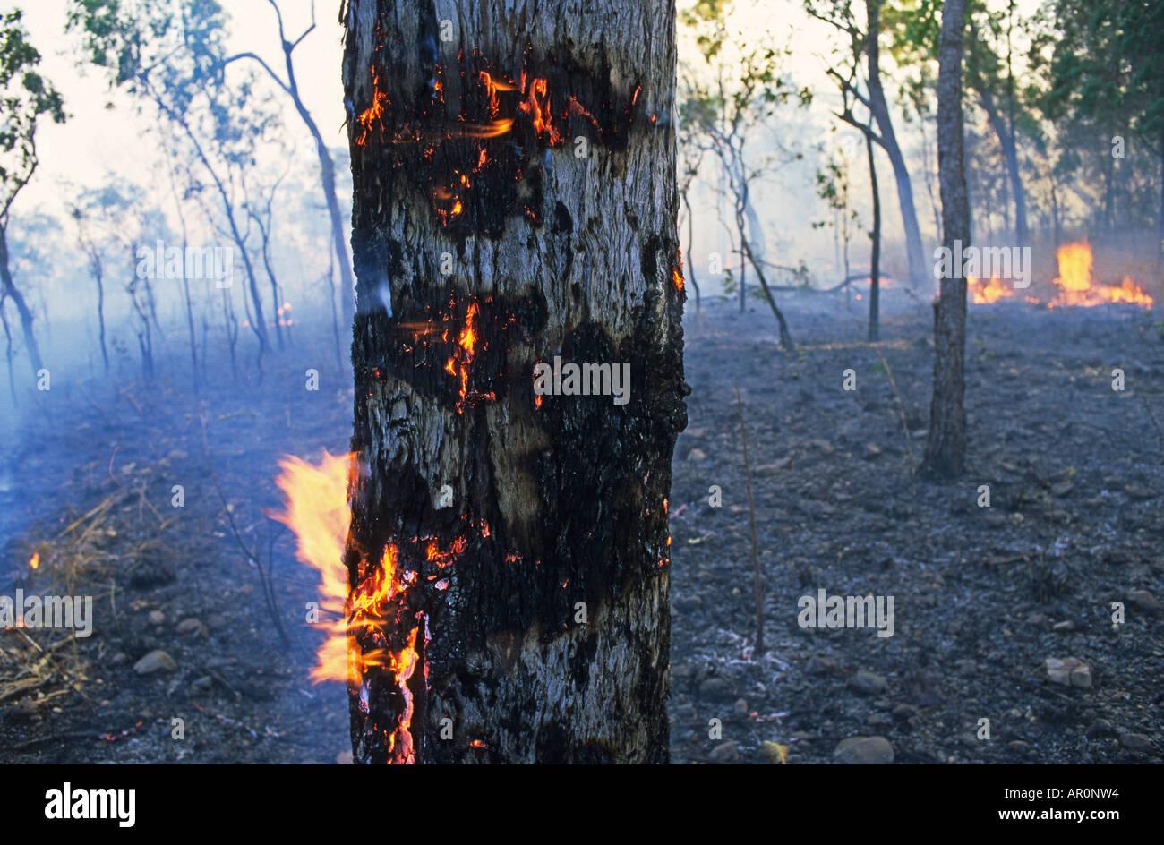 Bushfire, Litchfield NP, Australien, Summer Bushfire in Litchfield National Park, after dry period, Waldbrand im Sommer in outba - Stock Image