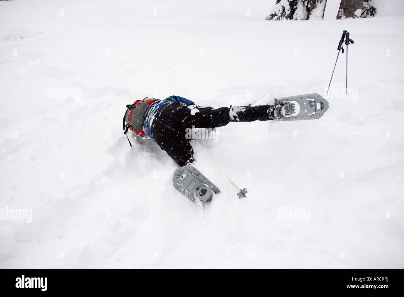 A snowshoer falls down into the snow. - Stock Image