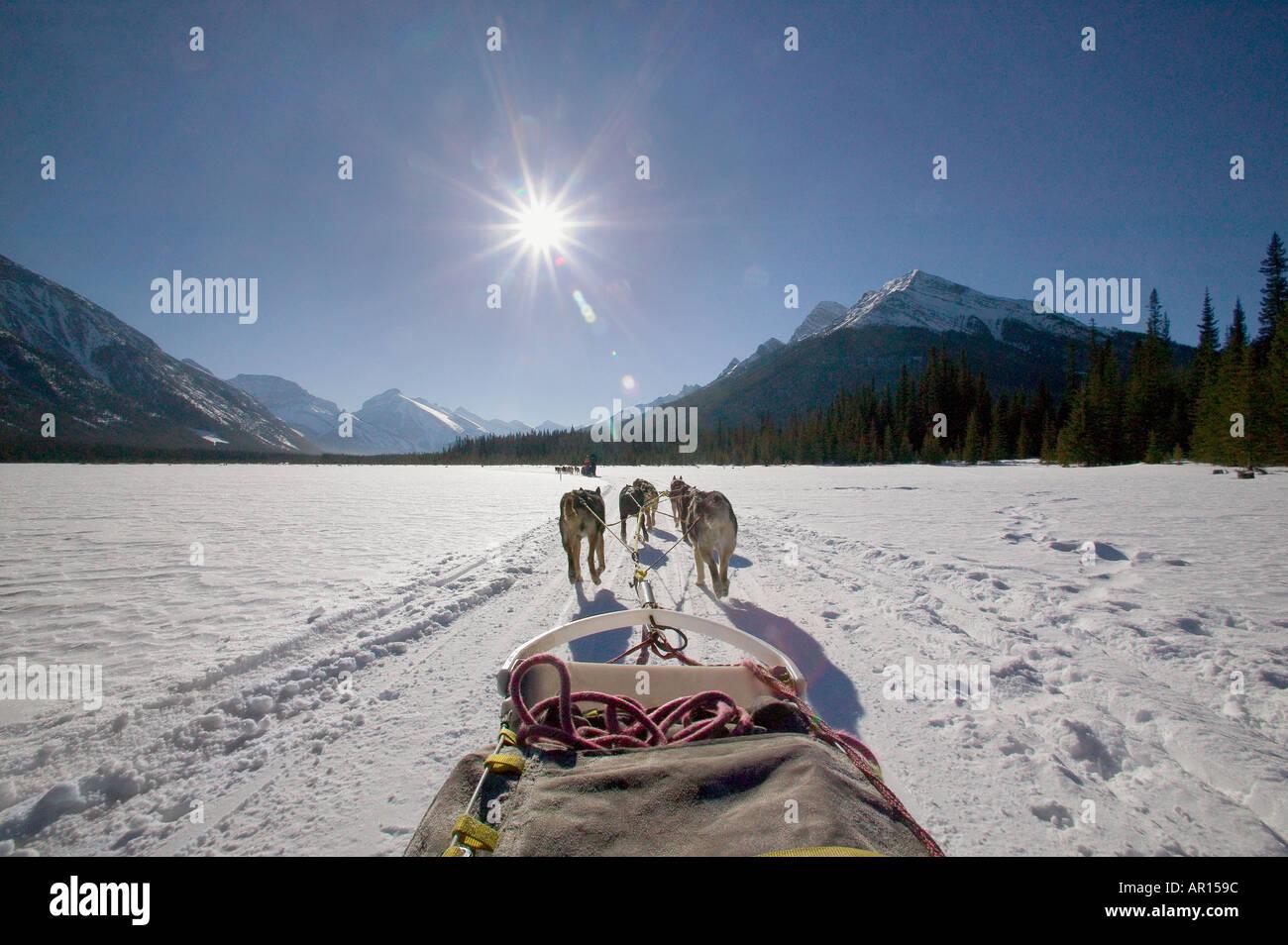 Dog sled team pulling sled over frozen lake - Stock Image