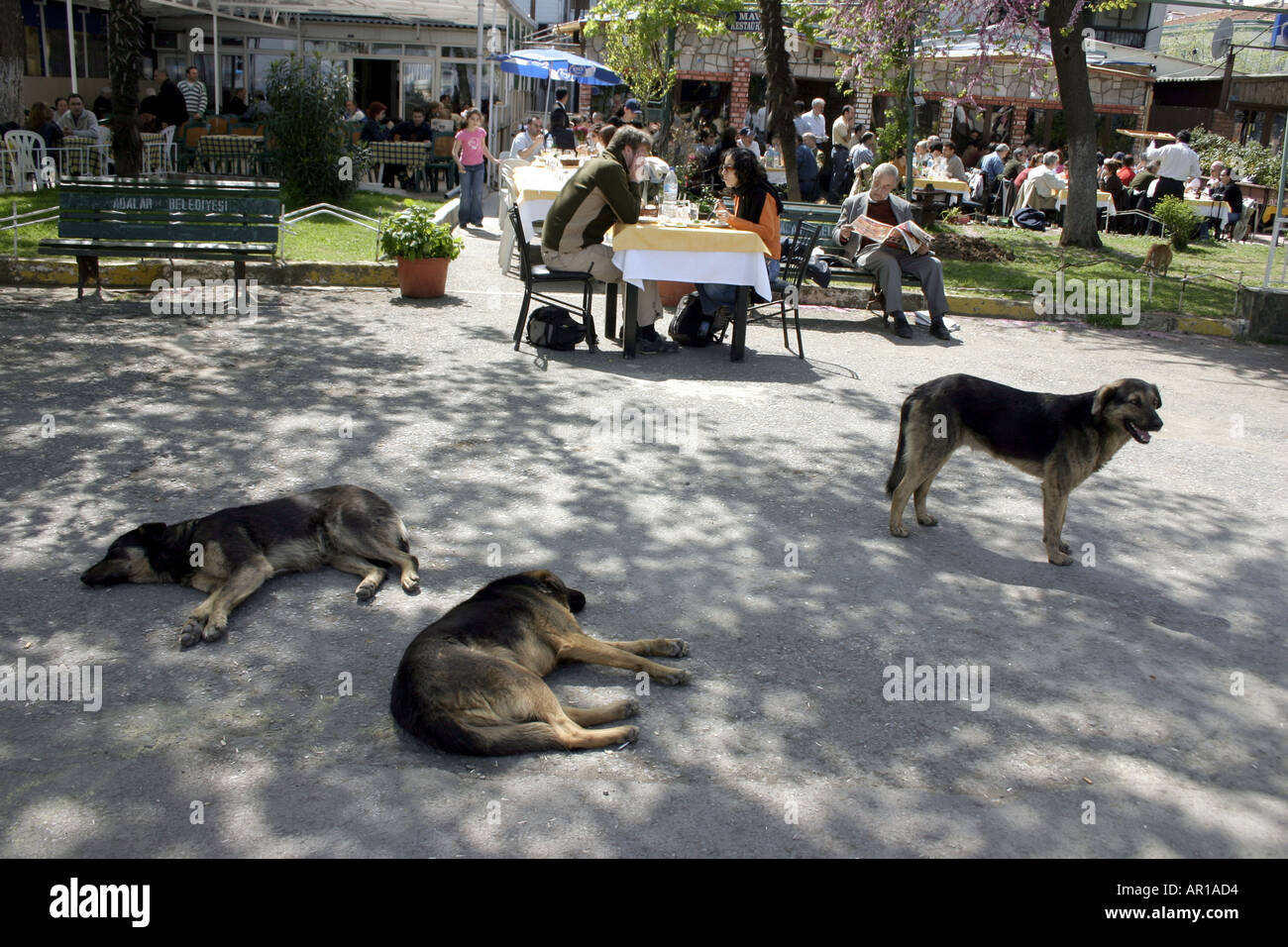 stray dogs in the park - Stock Image