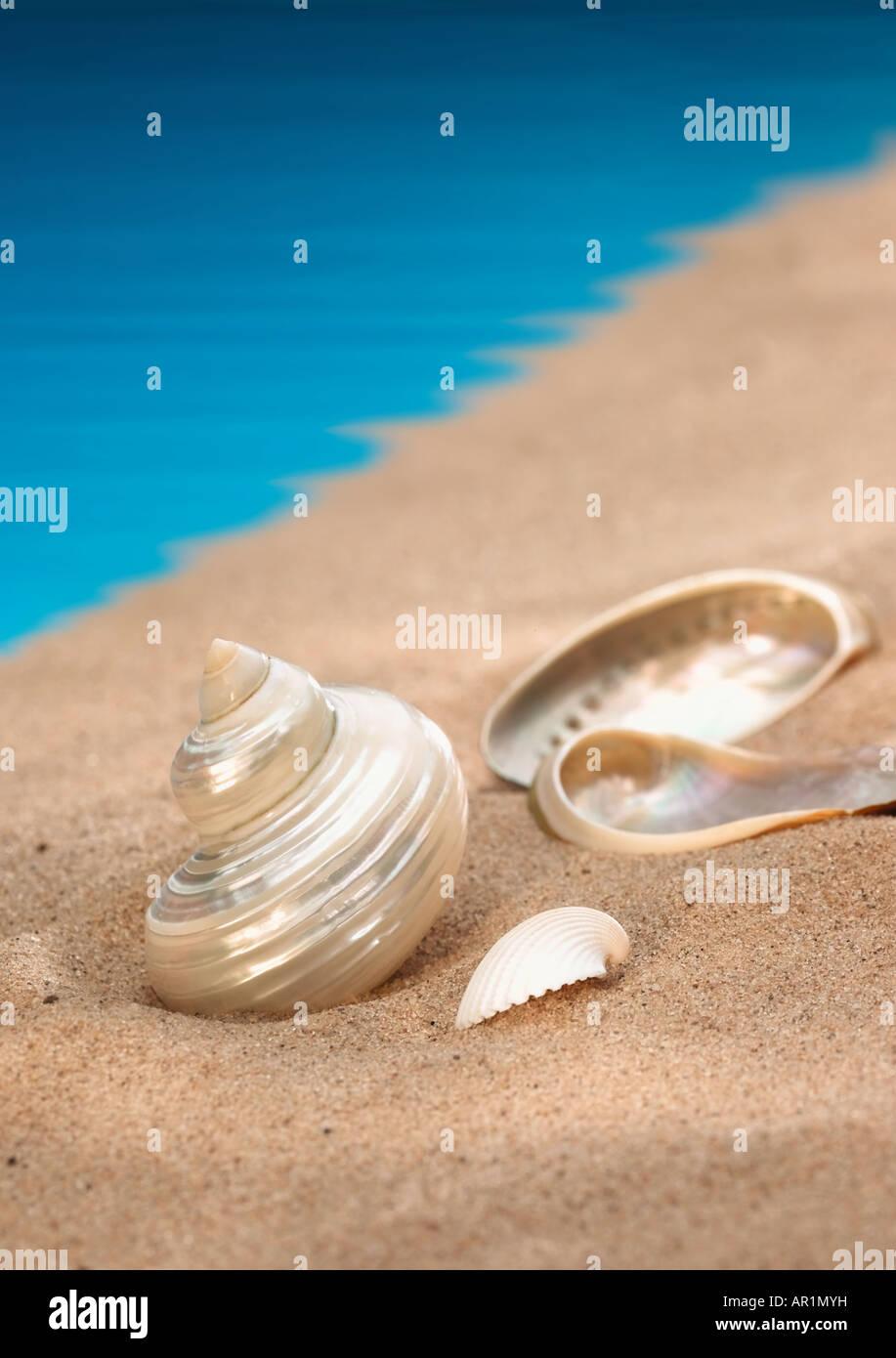 seashore - Stock Image