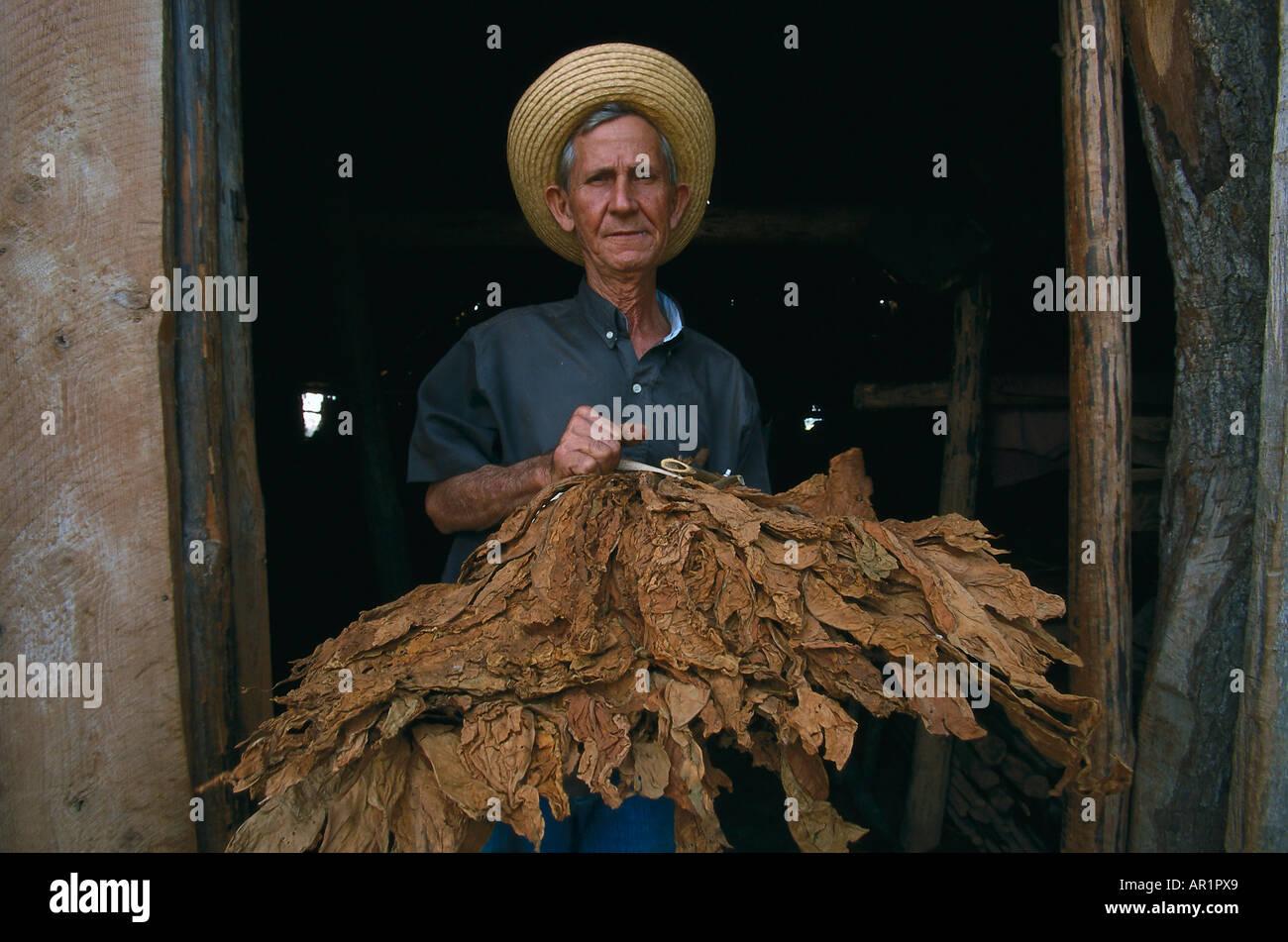 tobacco farmer in doorway with dried leaves, Valle de Vinales, Cuba - Stock Image