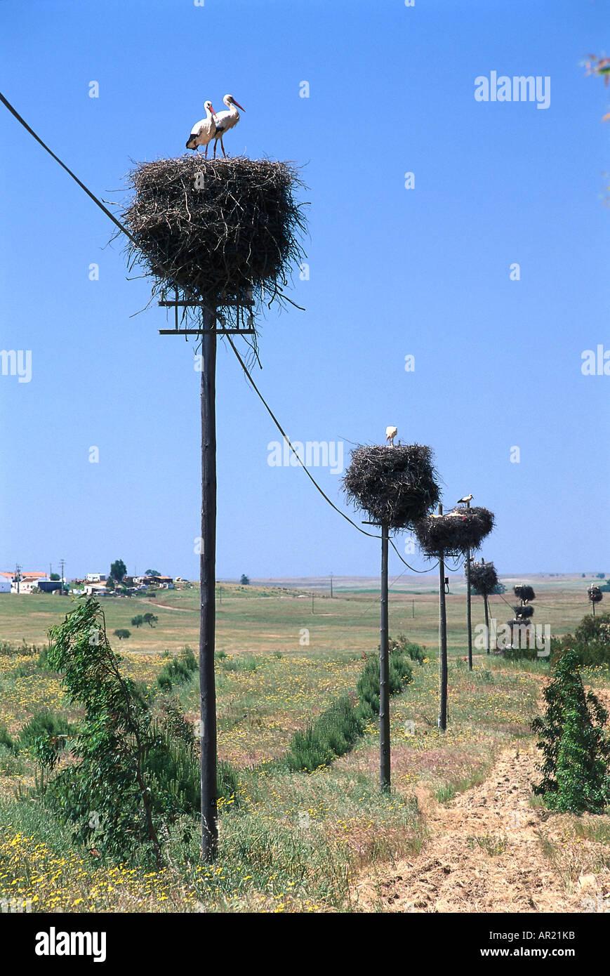 Stork nests on power poles, Alentejo, Portugal Stock Photo