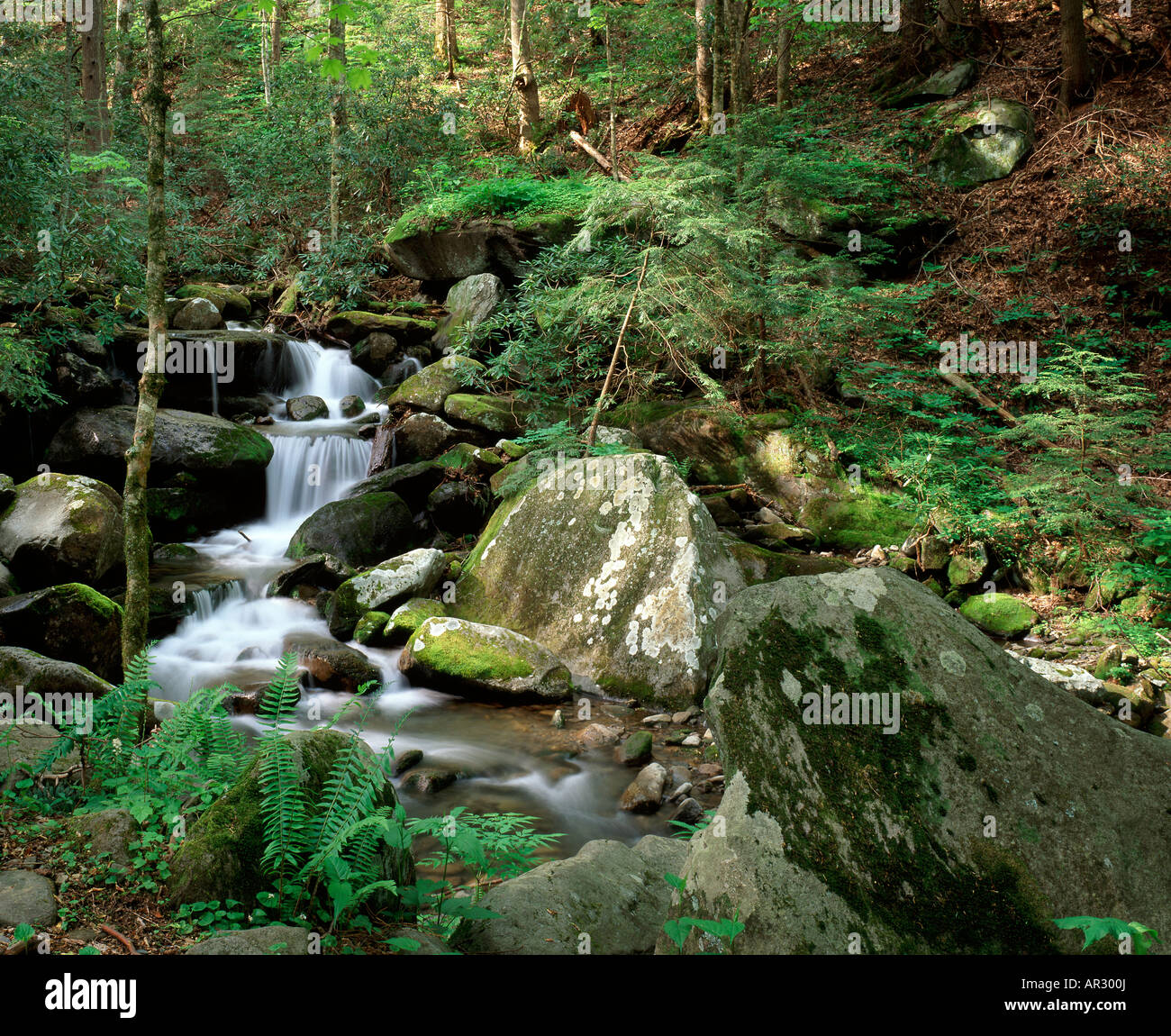 LeConte Creek, Great Smoky Mountains National Park, Tennessee USA - Stock Image