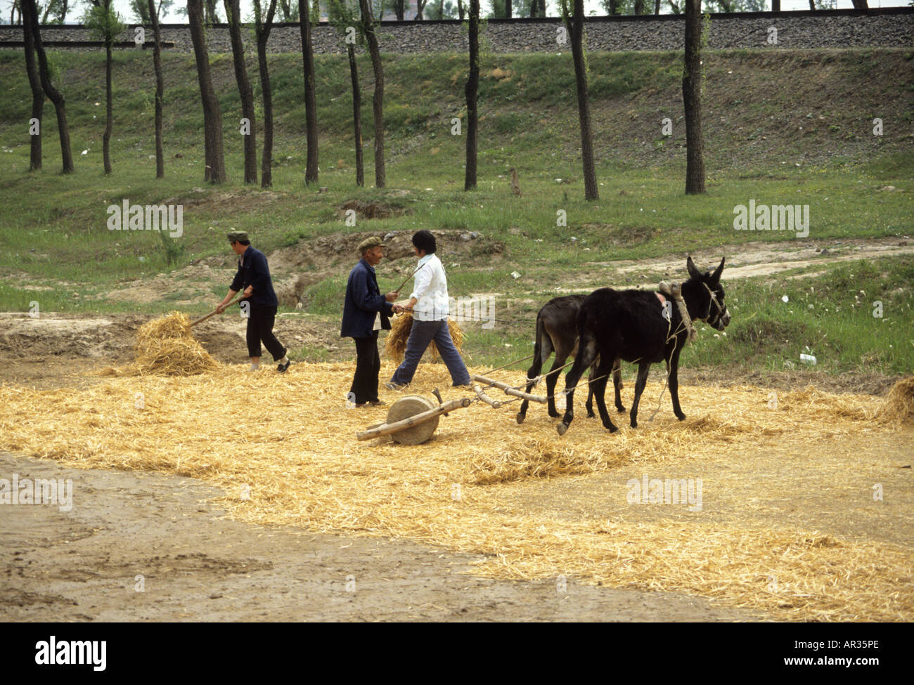 Using a donkey to pull a heavy stone to grind corn in rural China - Stock Image