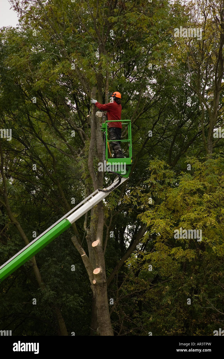 Tree Surgeon safely removing tree from a confined space using a hydraulic platform - Stock Image