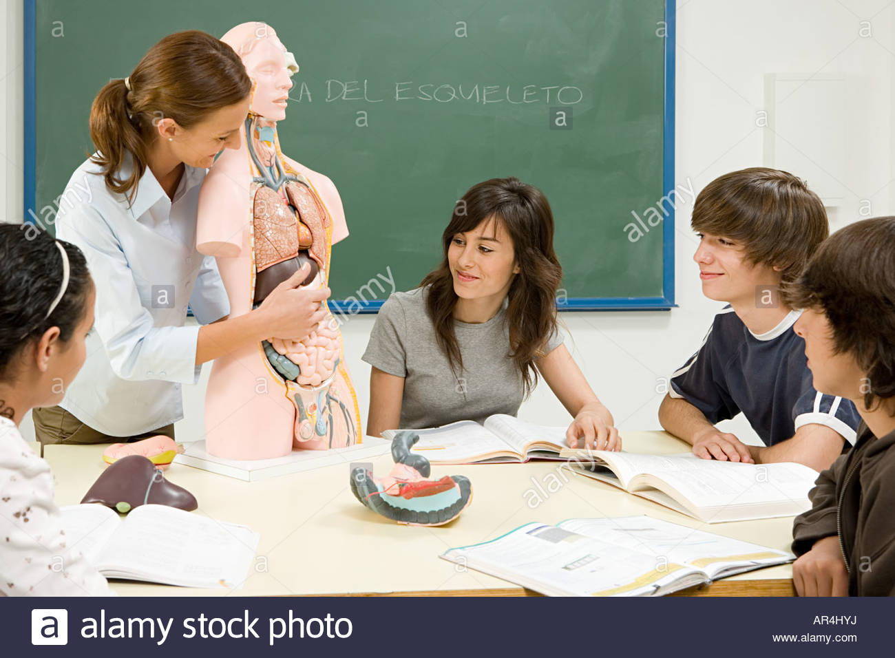 Pupils and teacher with anatomical model - Stock Image