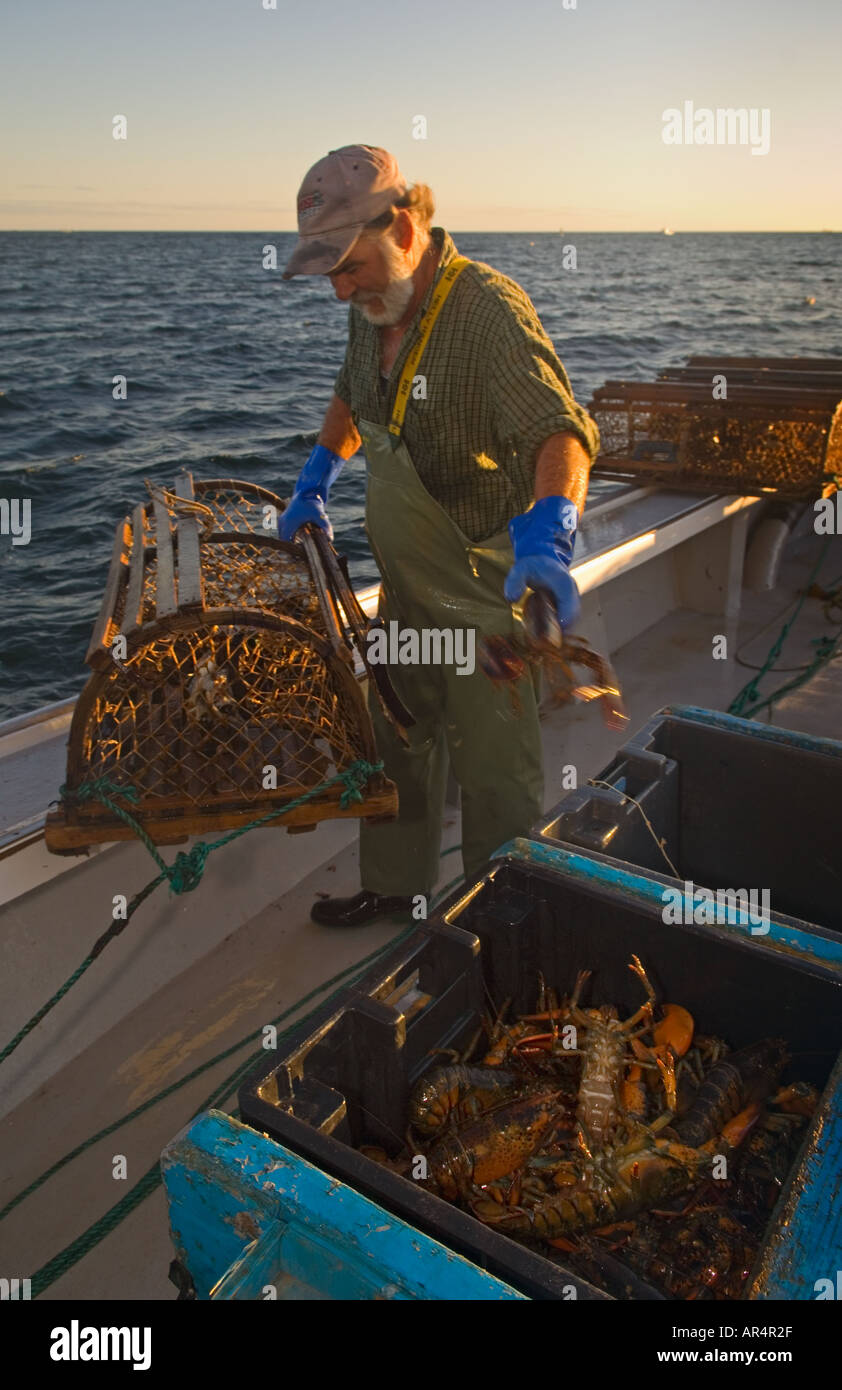 Fisherman Keith Peters removing lobster from traps on boat Silver Wave near Rustico Prince Edward Island Canada - Stock Image