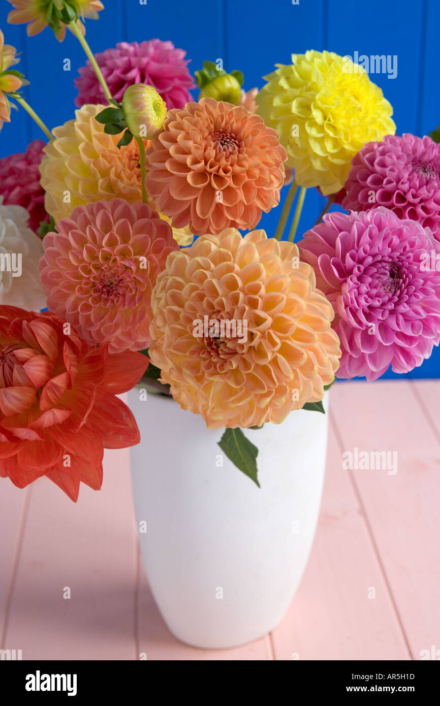 Dahlia flower arrangement stock photo 5205276 alamy dahlia flower arrangement izmirmasajfo