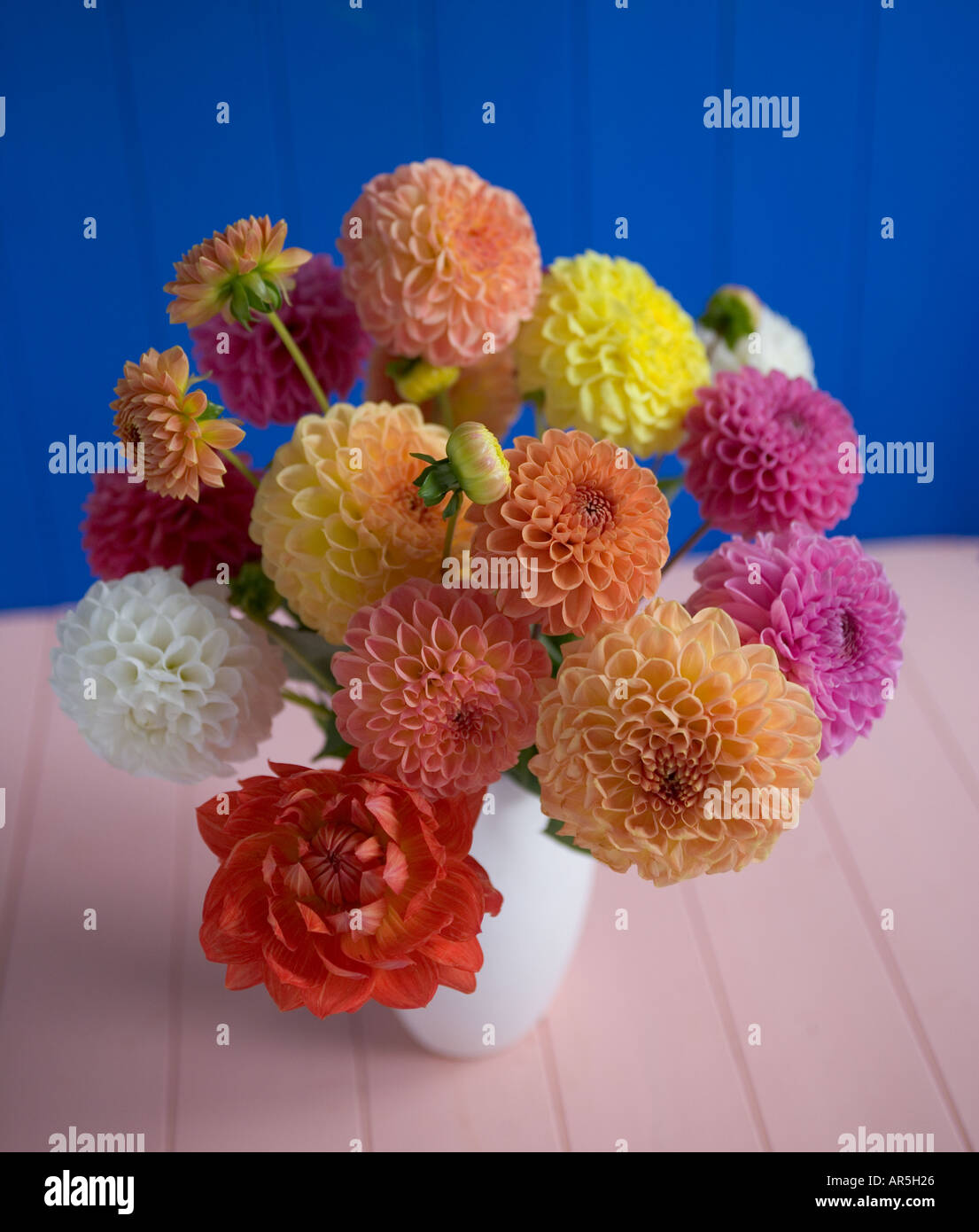 Dahlia flower arrangement stock photo 5205285 alamy dahlia flower arrangement izmirmasajfo