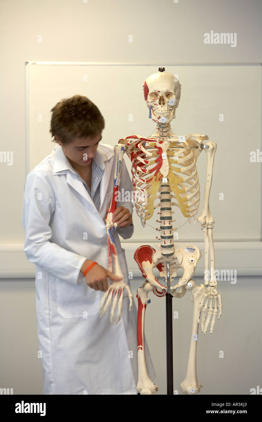 Medical Student Loooking At Model Of A Human Skeleton Stock Photo