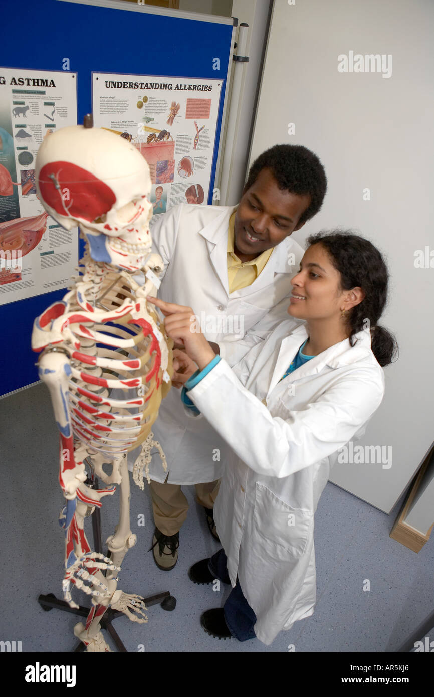 Medical Students Studying Brain Stock Photos & Medical Students ...