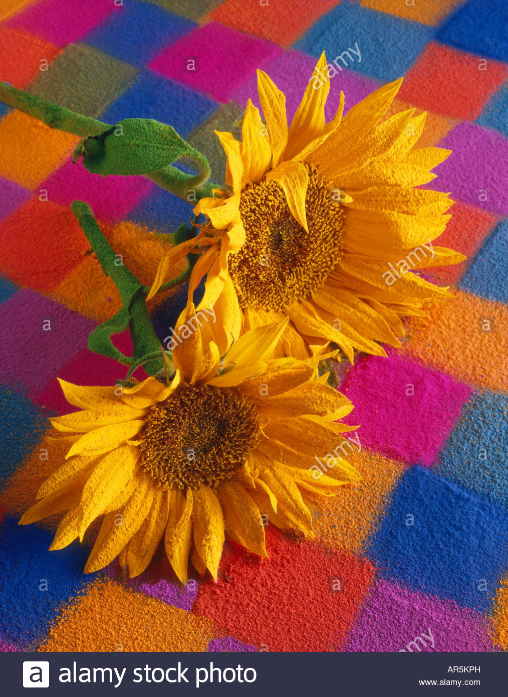 Stylised sunflowers with a textured covering. - Stock Image
