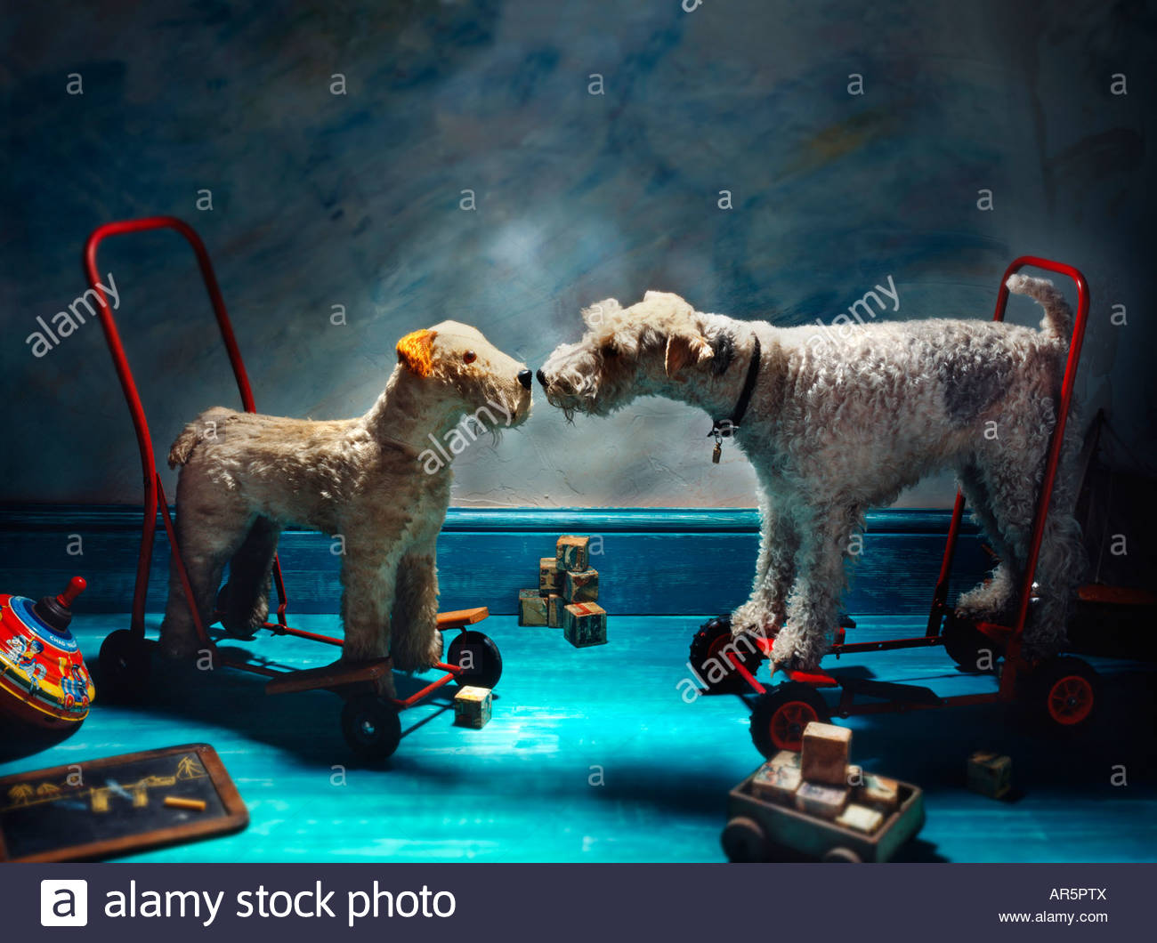 Toy Fox Terrier Stock Photos & Toy Fox Terrier Stock Images - Alamy