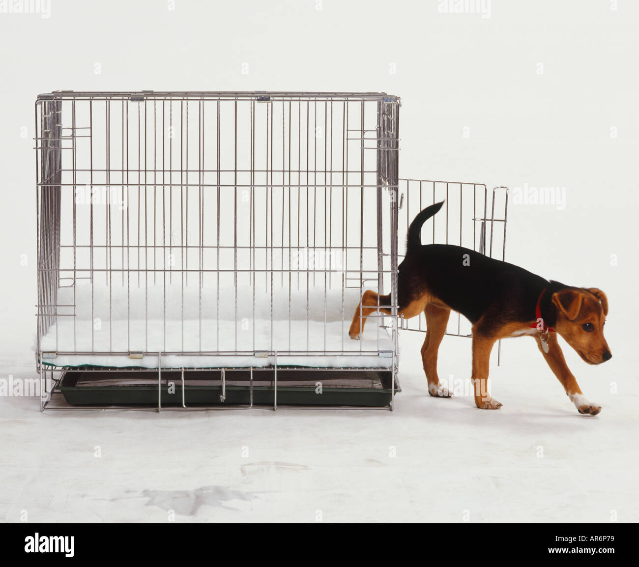 Puppy Cage Stock Photos & Puppy Cage Stock Images - Alamy
