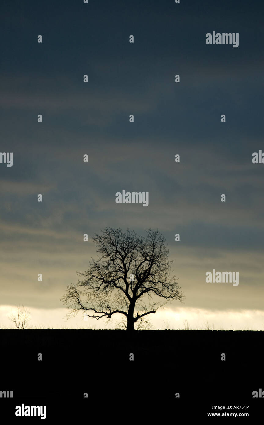 Lone tree and glimmer of light against brooding dark clouds - Stock Image