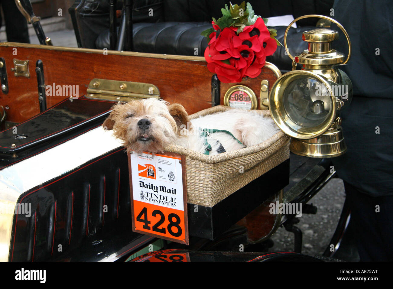 Dog asleep in a basket on the front of a 1904 De Dion Boulton Reg. No. CL142  Mr Edwin Jowsey  North Yorkshire No.428 - Stock Image