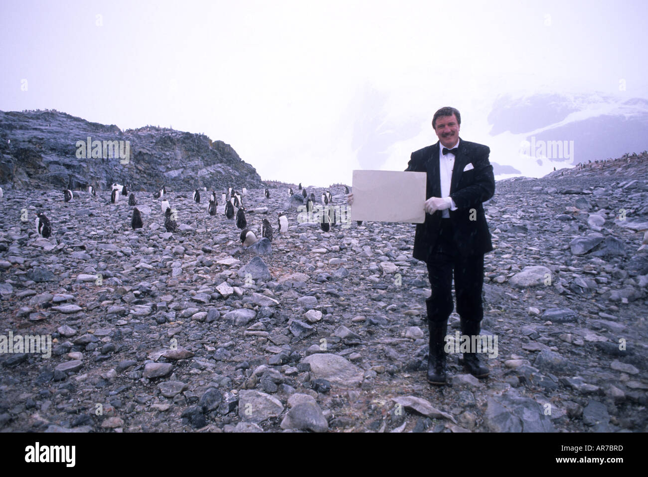Tourist in tux having fun sign among Gentoo Penguins in Antarctica Peninsula wildlife birds sign can say anything for advertisin - Stock Image