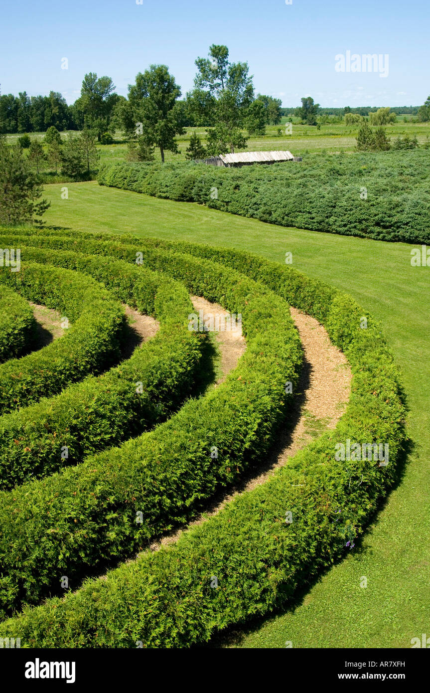 Sculpted shrubbery in garden. - Stock Image