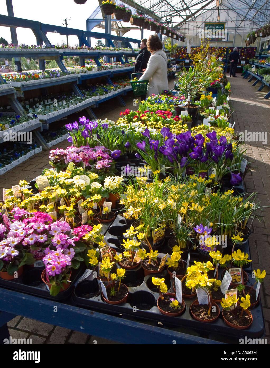 Spring Flowers For Sale In A Garden Centre England February Uk Eu