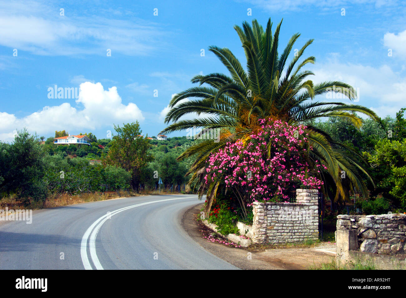 Tropical foliage with flowers in the countryside of the Peloponesse Greece - Stock Image