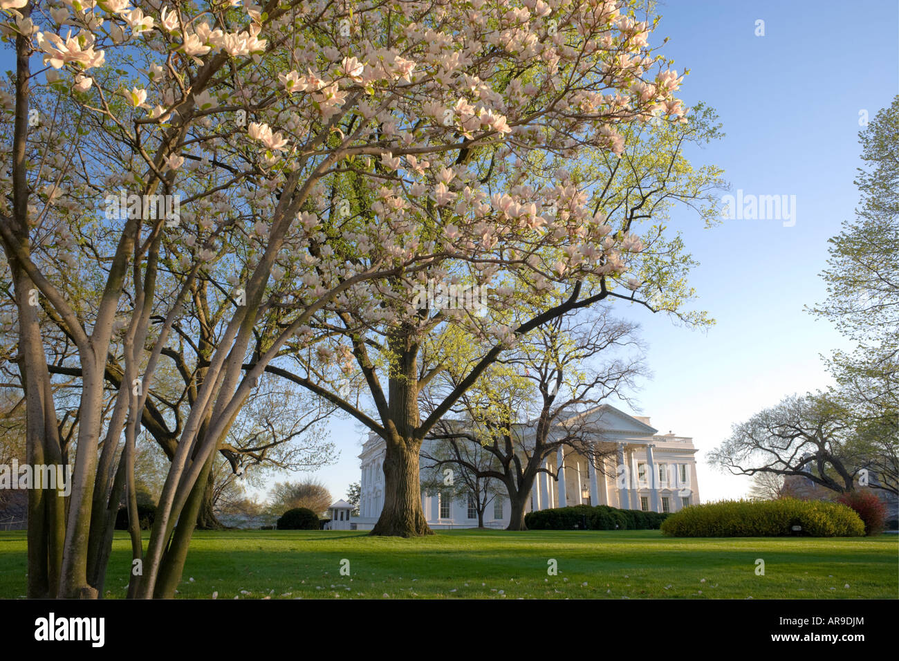 Springtime View Of The Front Of The White House With Flowering Stock