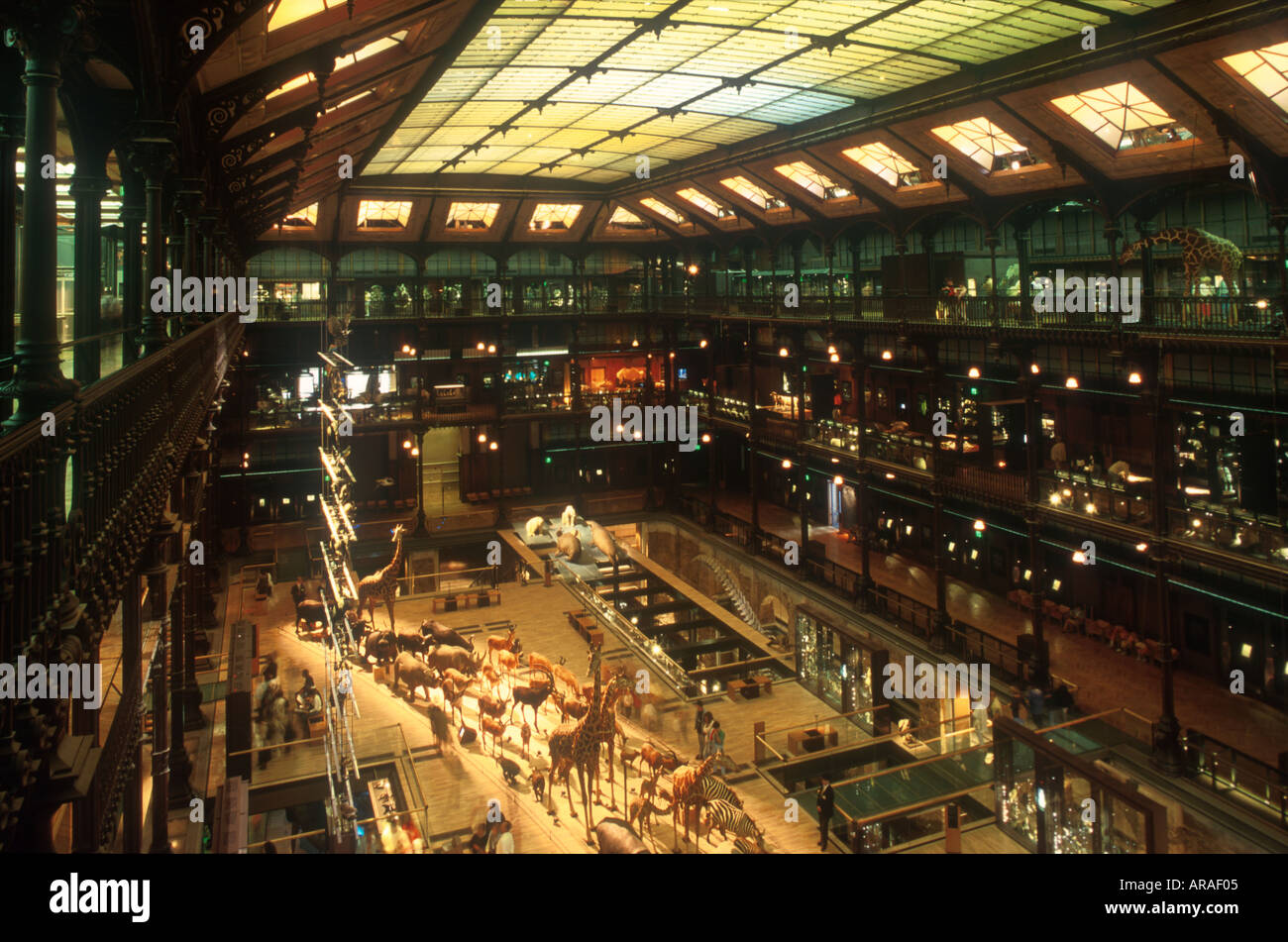 Hall of th Paleontological Gallery Museum National d Histoire Naturelle Jardin des Plantes Paris France Europe  - Stock Image