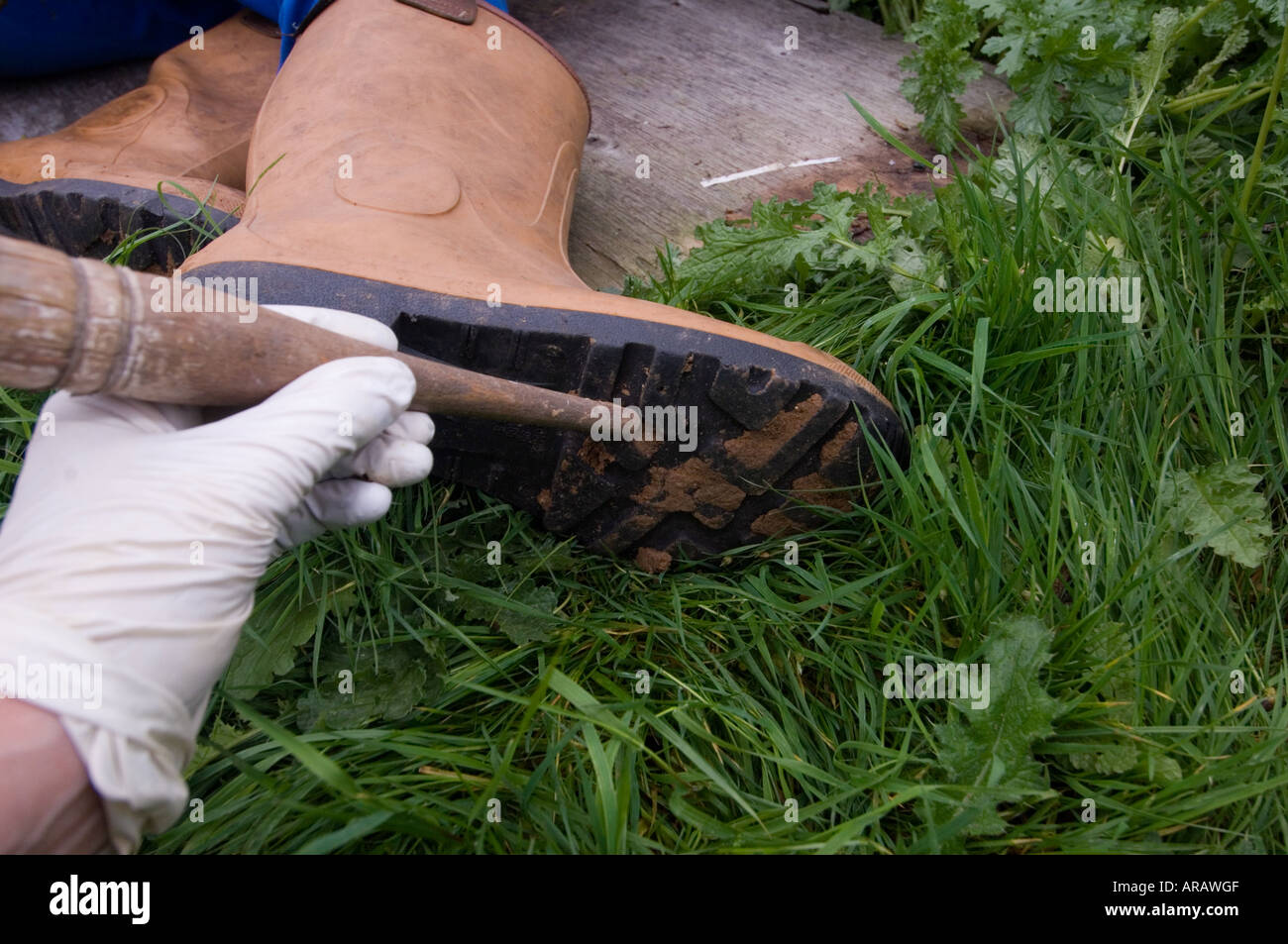 Forensic scientist collecting soil sample from boots of deceased. - Stock Image