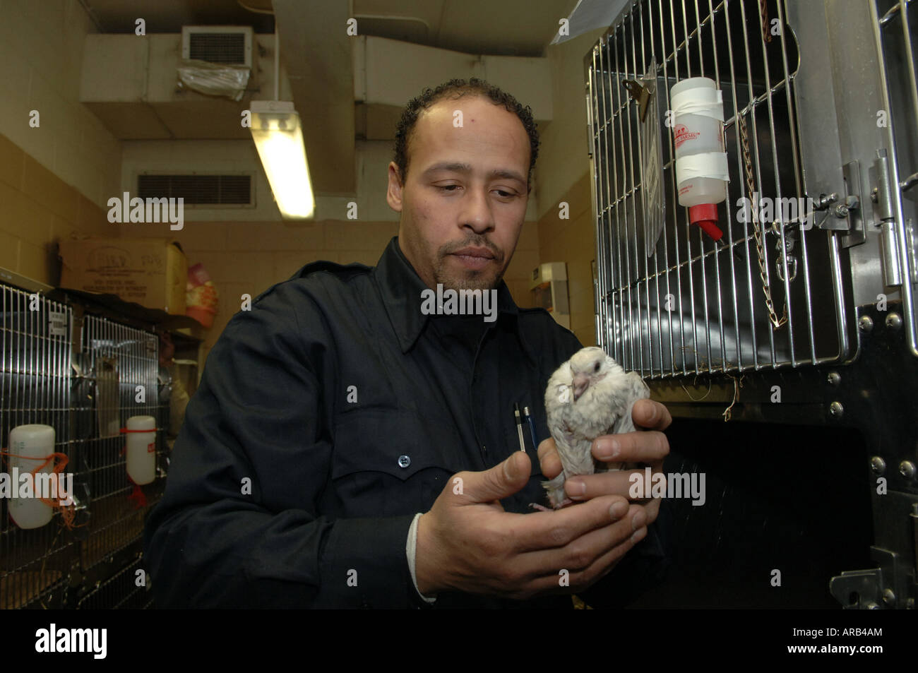 Worker at NYC Animal Care and Control comforts a sick pigeon - Stock Image