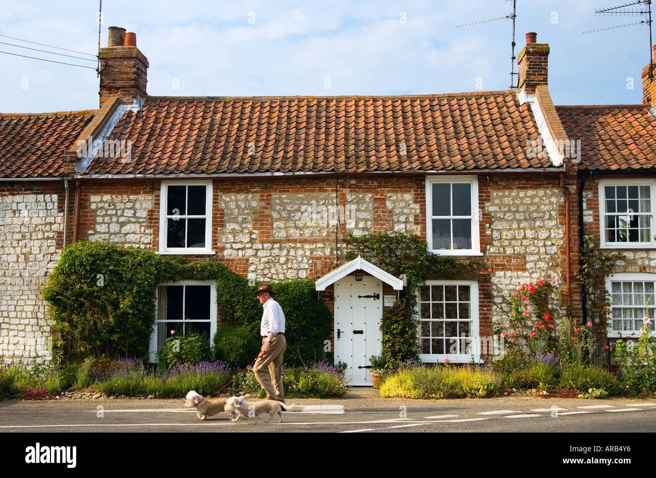 Man walks his dogs past typical brick and flint Norfolk home near Burnham Market UK - Stock Image