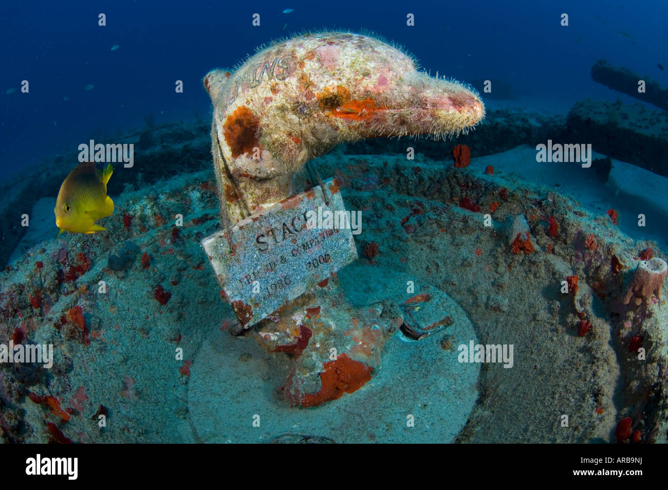 Underwater memorial for deceased person on a shipwreck in Jupiter FL - Stock Image