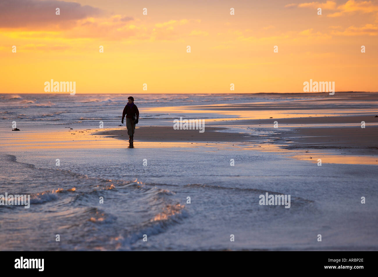 woman walking on the beach at dawn Bamburgh Northumbia England UK - Stock Image